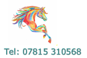 Elaine Mariani Equine Sports Massage Therapist